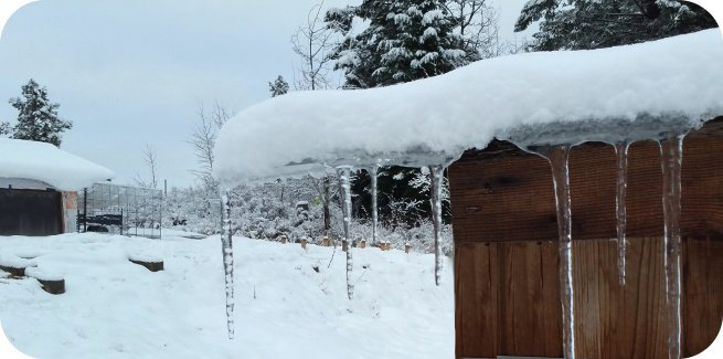 icicles hanging off the chicken coop