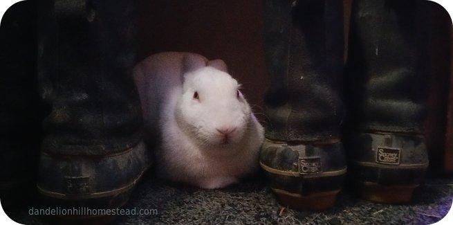 my house bunny Newton