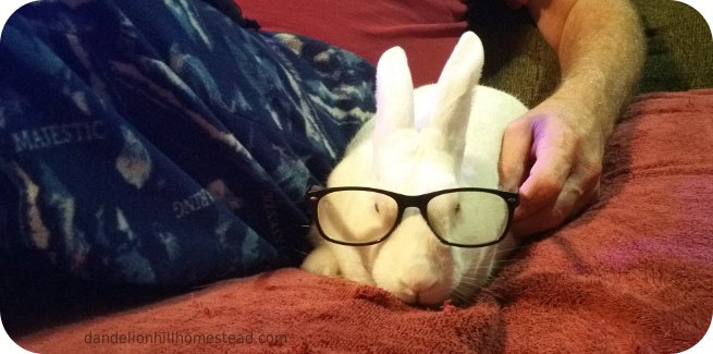 Newton wearing my glasses