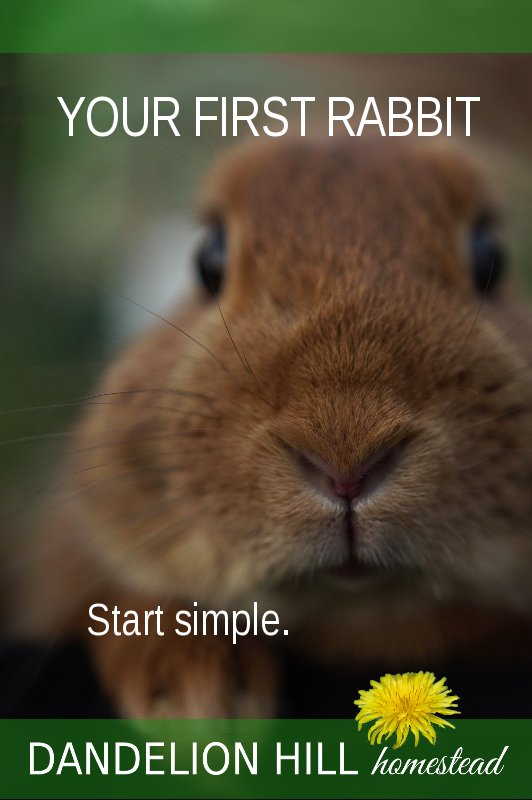 Pinterest image for Your First Rabbit article