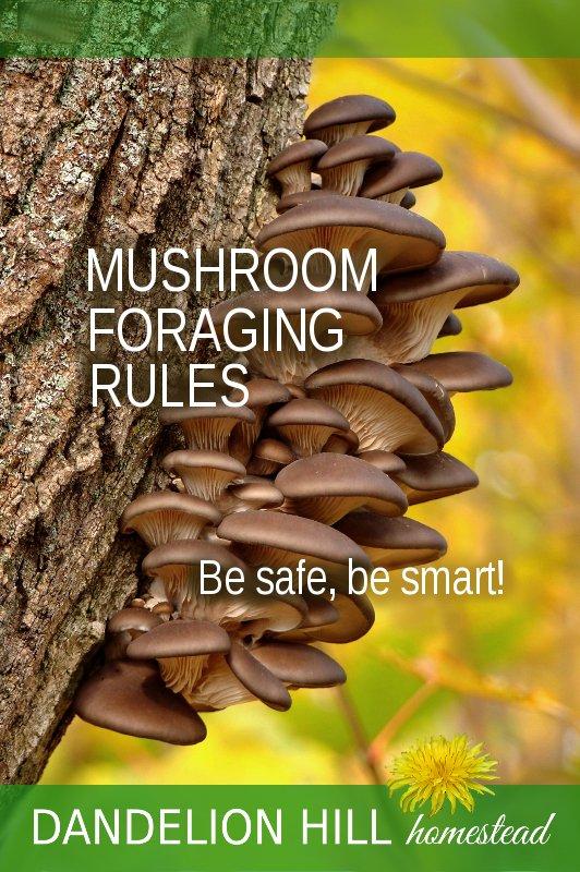 Pinterest image for Mushroom Foraging article