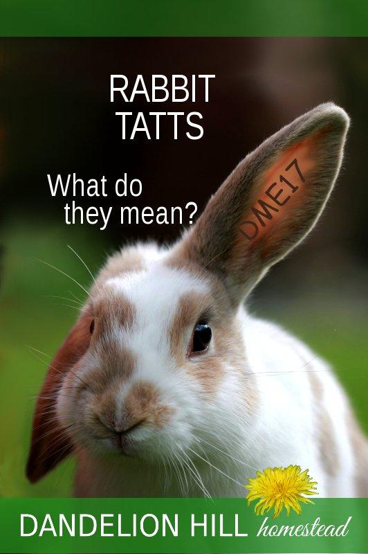 Pinterest picture for Rabbit Tatt article