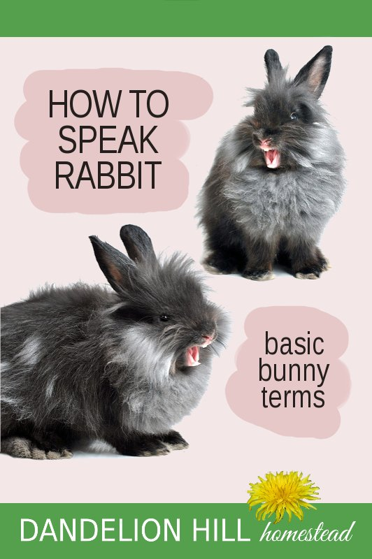 Pinterest image for basic bunny terms