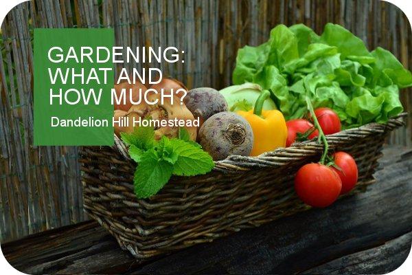 basket of garden produce