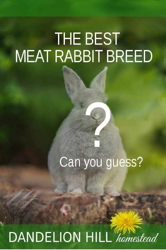 Pinterest pin for Best Meat Rabbit Breed