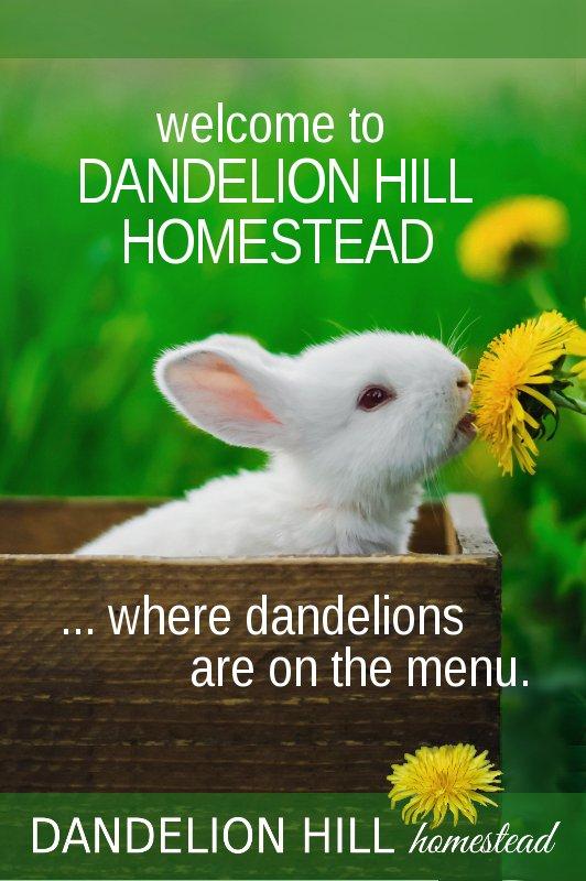 Pinterest image for Dandelion Hill Homestead