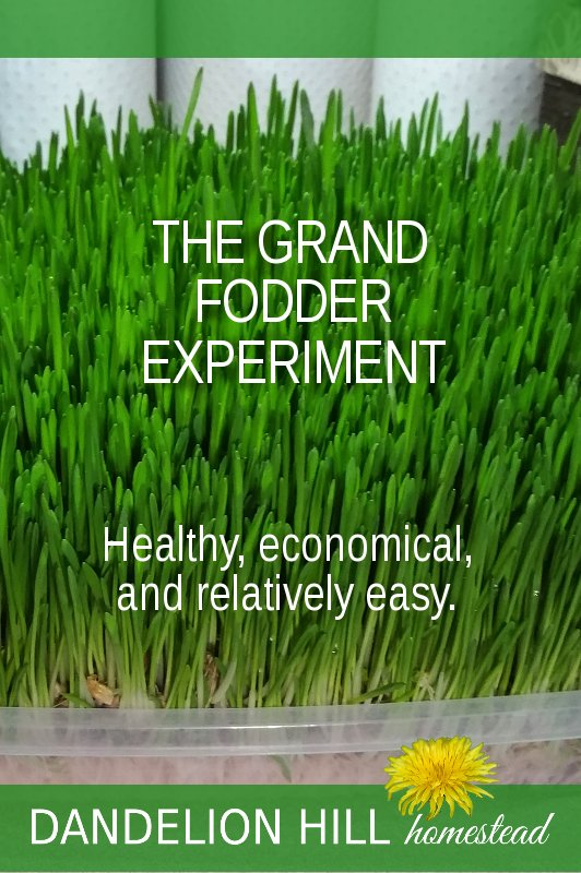 Pinterest image for The Grand Fodder Experiment article