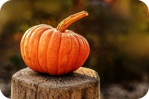 pumpkin on log