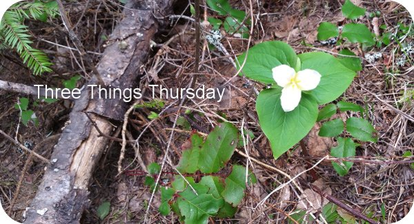 trillium - an early spring flower