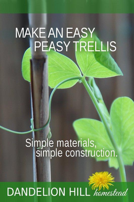 Pinterest image for Easy-Peasy Trellis