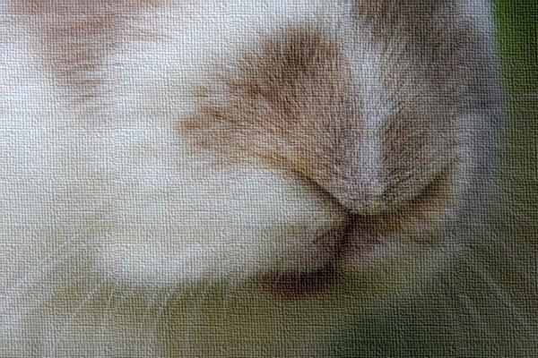 rabbit nose