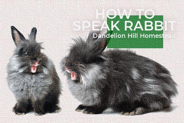 two rabbits talking