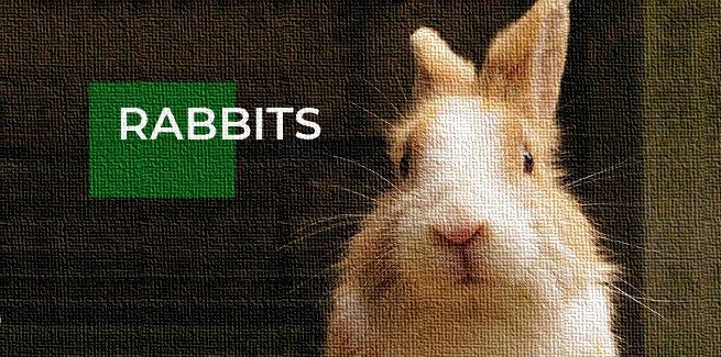rabbit articles