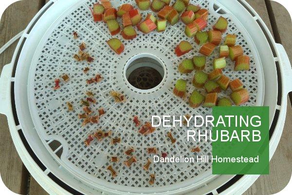 rhubarb bits in a dehydrator